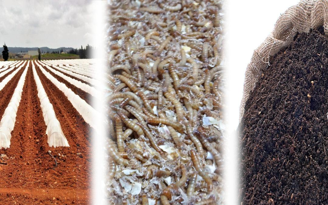 Las lombrices pueden transformar el plástico en fertilizante, según un estudio de la UMH