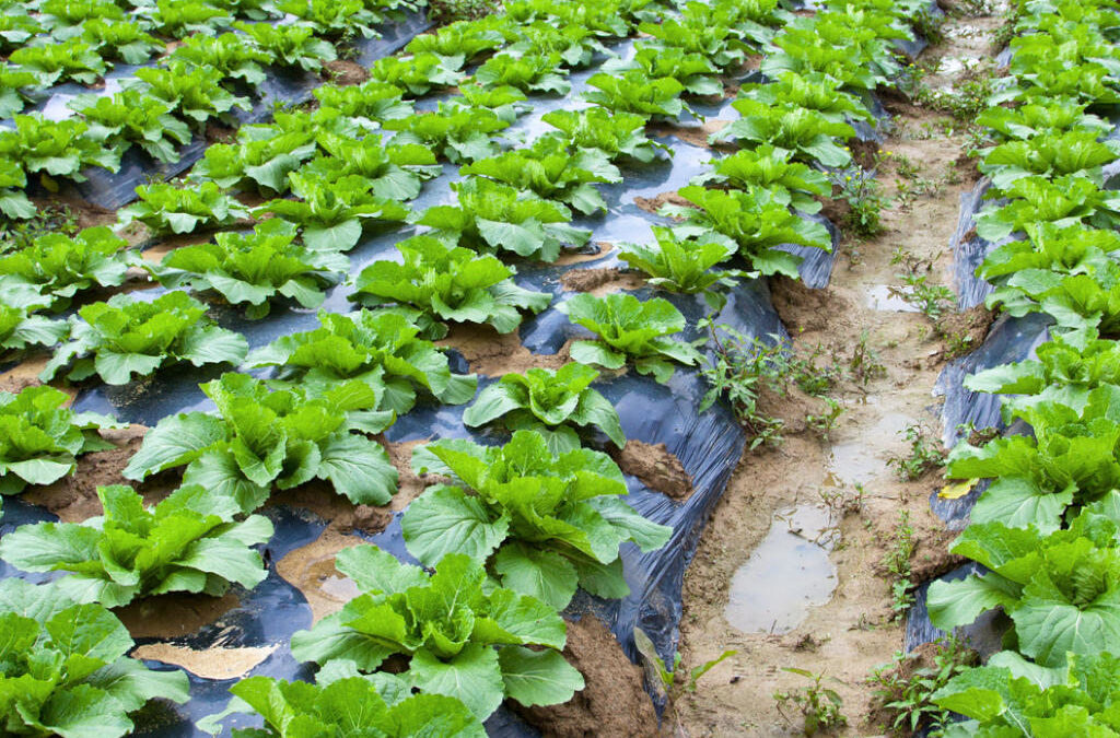ITENE participa en el desarrollo de un proceso de degradación de plásticos agrícolas mediante el uso de insectos y lombrices que los ingieren